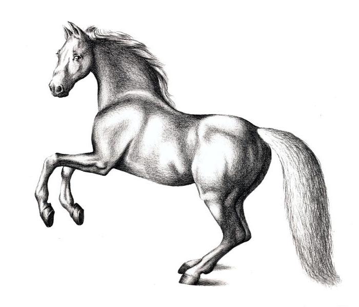 schöne bilder zum nachmalen, renender pferd zeichnen, realitische schwarz graue zeichnung