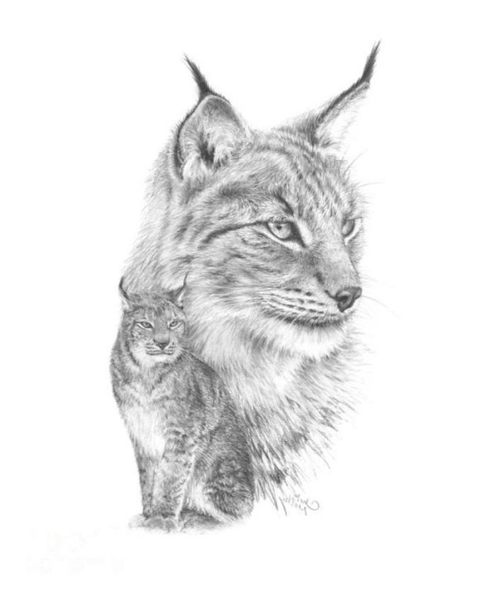 schöne bilder zum selber malen, ezcihnen mit bleistift, wilde katze, realitische zeichnung