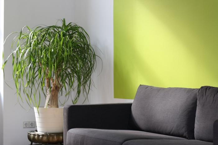 feng shui einrichtung, grüne pflanze, zimmerpflanzen ideen, graues sofa, grüne wand, kleiner baum