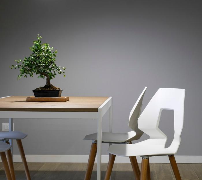 feng shui einrichtung ideen, tisch aus holz, kleiner baum, bonsai pflanze, weiße stühle, graue wand, wohnungsdeko