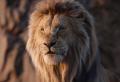 """Beyonce veröffentlicht den ersten """"Der König der Löwen""""-Song! Und erste Kommentare zu dem Film!"""