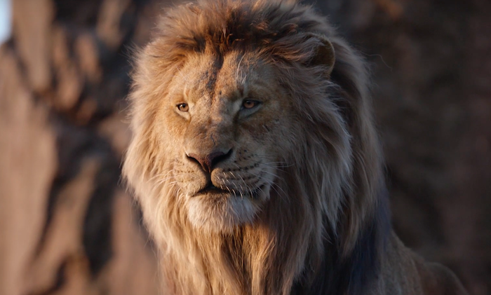 eine szene aus dem film der könig der löwen, ein gelber jinger löwe mit einer gelben dicjten mähne