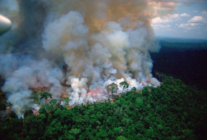 großer brennender amazonas regenwald, ein großer brand, wald mit vielen grünen bäumen in brasilien