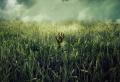 """""""In The Tall Grass"""" – erster Trailer zu der kommenden Stephen-King-Verfilmung bei Netflix"""