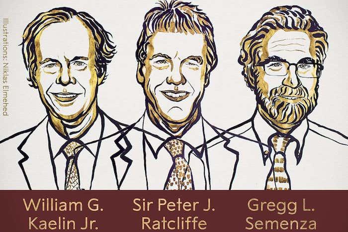 der nobelpreis für medizin, drei zellenforscher willam kaelin jr, sir peter ratcliffe und gregg semenza, ein mann mit bart und brille