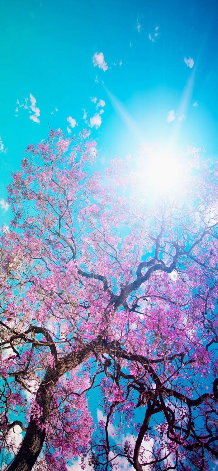 hintergrundbilder iphone x, sonne im himmel, blaum mit rosa blättern, frühling