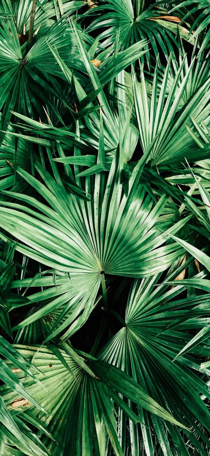 iphone wallpaper, die besten ideen, große grüne blätter, tropische bäume, palmenblätter