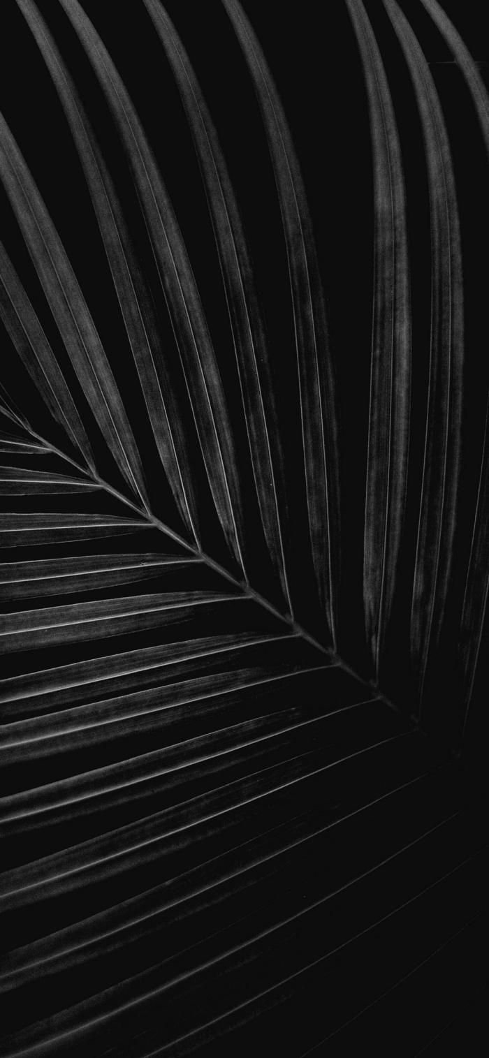 wallpaper iphone x, hintergrundsbild in schwarz und grau, großes palmenblatt