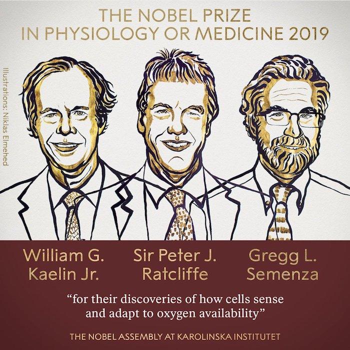 die nobelpreisträger für medizin, drei männer mit krawatten, ein mann mit bart und brille, die forscher william kaelin, sir peter ratcliffe und gregg semenza