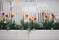 Blumenzwiebeln im Topf anpflanzen – so gelingt's!