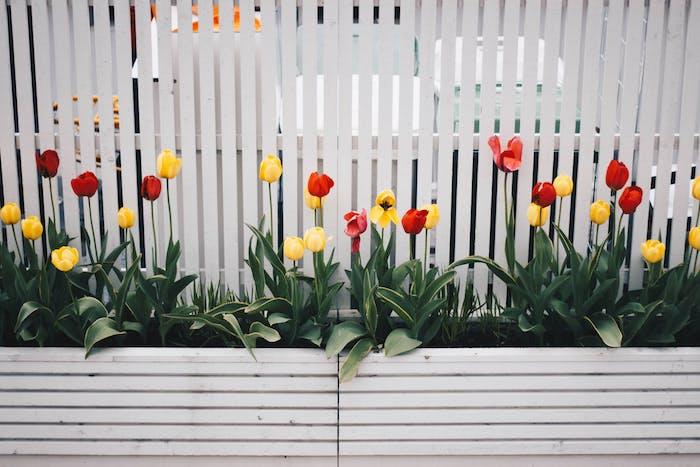 So werden Blumenzwiebeln in die Töpfe und Blumenkästen eingebracht, rote und gelbe Tulpen in Blumenkästen