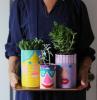 pflanzer in blechdosen bemalt in bunte farben verschiedene grüne pflanzen upcycling ideen einfac
