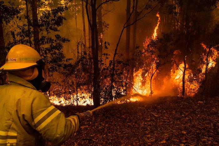 die buschbrände in australien, ein wald mit feuer, ein feuerwehrmann, der schauspieler russel crowe