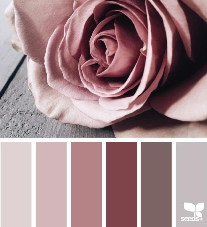 Welche Farbe passt zu rosa, Farbpalette für Wandfarbe in verschiedenen Schattierungen, Bild von einer Rose, Farben für Wohnzimmer tipps