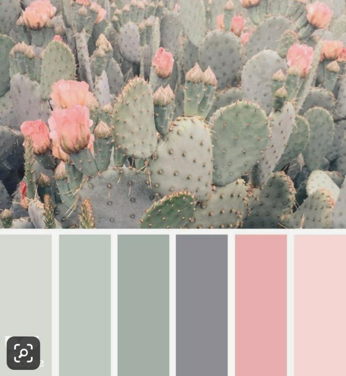 Mischfarben für Wände, Wandfarbe altrosa, Schattierungen von blassgrün bis altrosa, Kakteen und rosa Blumen