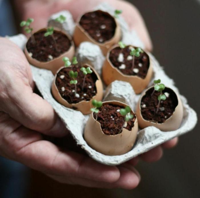 kreative upcycling Ideen Garten, Gartendeko selber machen, kleine Pflanzer aus Eierschalen, Hand hält Eierkarton,