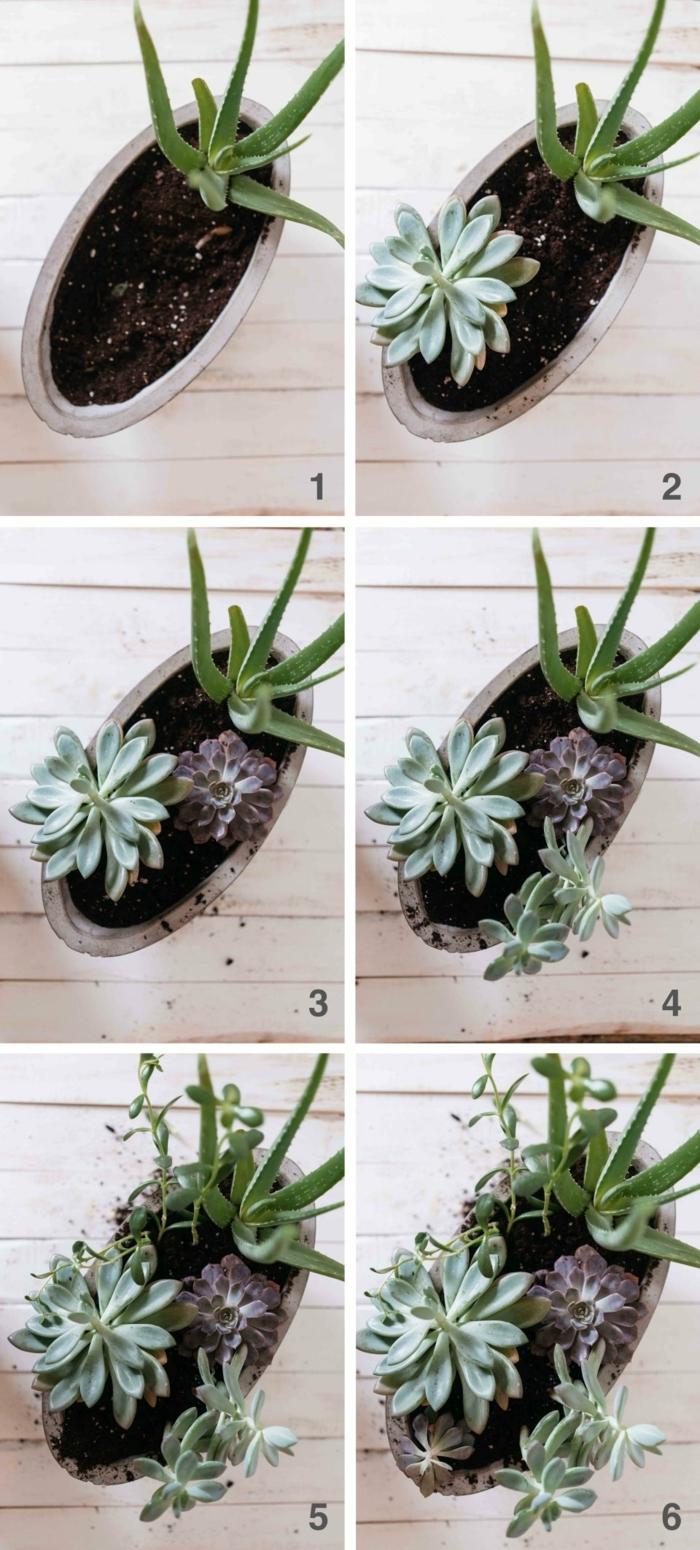 gartendeko basteln aus Naturmaterialien, Schritt für Schritt Anweisung für Anfertigung von Sukkulente, deko Ideen Garten