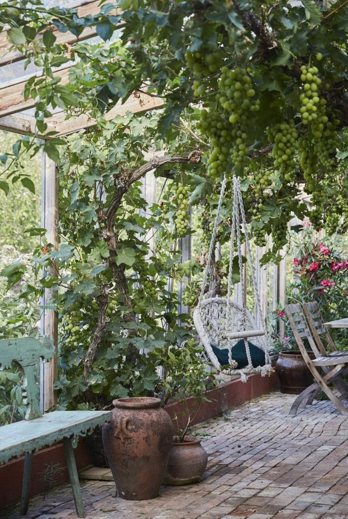 Trauben im Garten, weiße hängende Schaukel, Dekoration mit vielen grünen Pflanzen, Bank aus Holz, Gartengestaltung Ideen Bilder