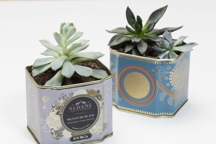 Upcycling Ideen Garten, Pflanzer aus Teedosen selbst basteln, Gartengestaltung Ideen Bilder, bunte Dosen aus Tee mit Kakteen