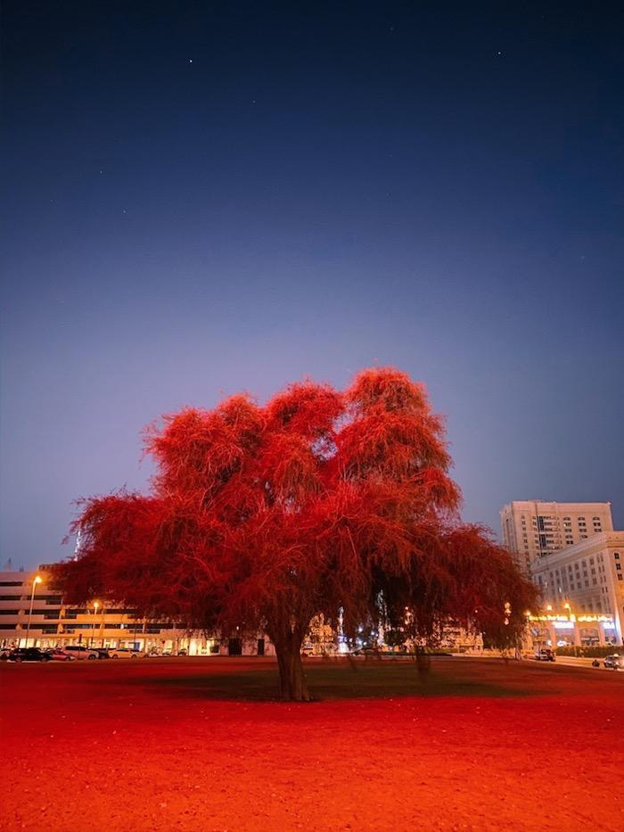 ein rotes baum in der nacht, gewinner bei dem wettbewerb nachtmodus bilder von apple, mitusun soni, iphone 11 pro max