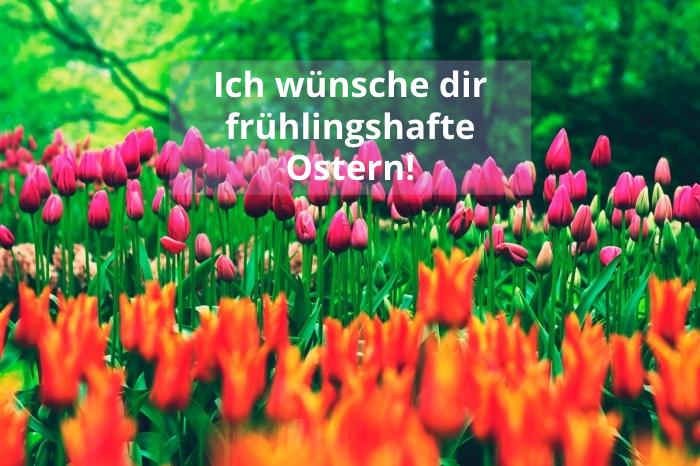 bilder ostern, rosa und orangenfarbene tulpen, ich wünsche dir frühlingshafte ostern