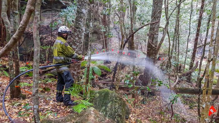 wilder wald mit immergrünen wollemien, ein junger. Feuerwehrmann im wald mit vielem dinosaurierbäumen