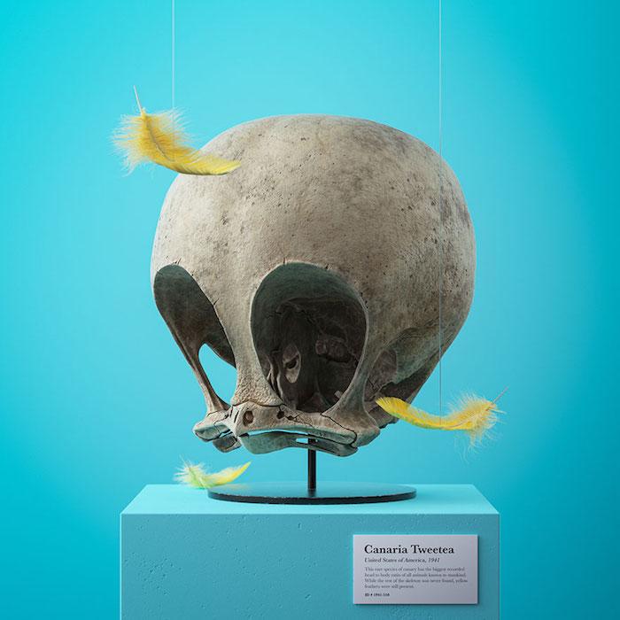 projeckt cartoon fossils von dem designer filip hodas, ein schädel von der cartoonfigur tweety, drei gelbe feder