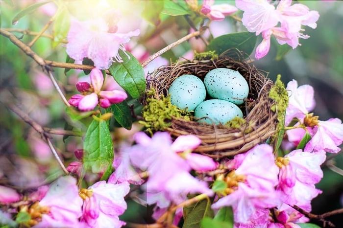 ostern bilder, osternest mit eiern, nest im baum, blaue osterier, rosa blüten