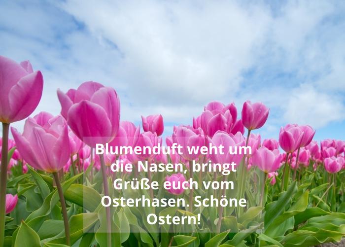 ostern bilder zum herunterladen, osterwünsche ideen, dei besten wünsche zum osterfest, rosa tulpen