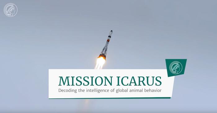 beobachtung von tieren, das projekt icarus, eine rakette im all