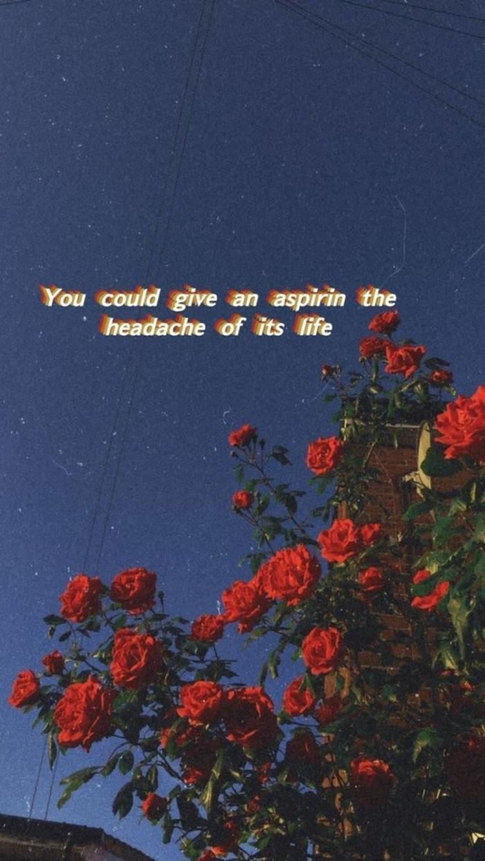 ästhetische Tapete von roten Rosen am blauen Himmel, Hintergrundbild Handy mit Spruch, You could give aspirin the headache fo its life, aesthetic wallpaper iphone