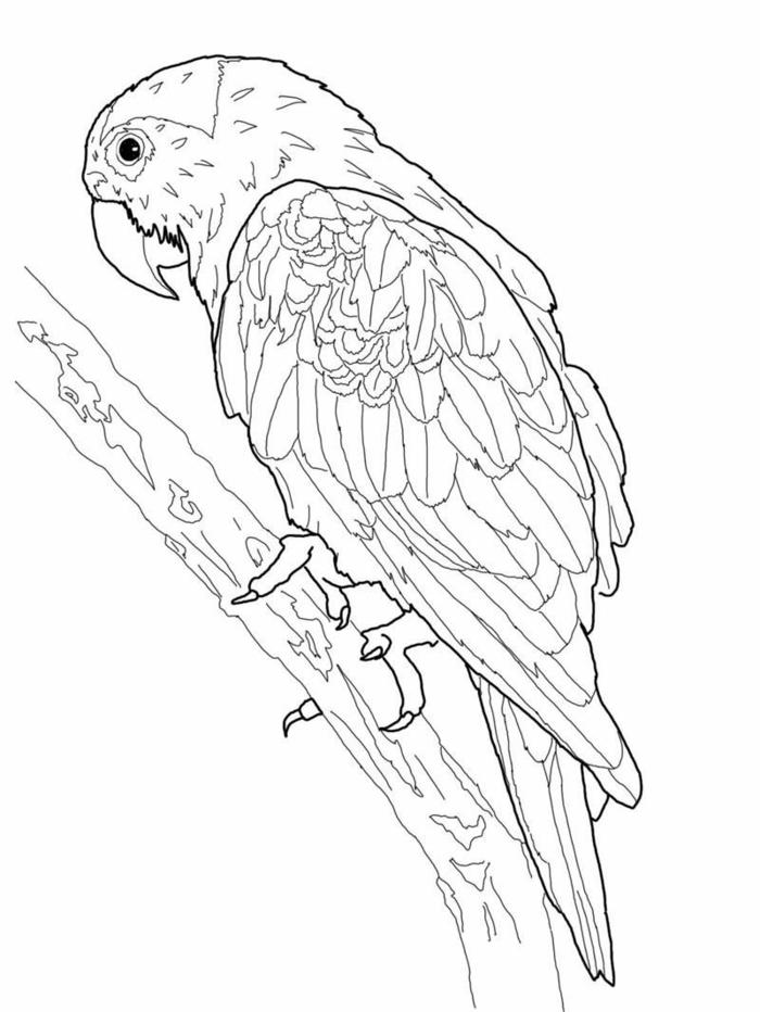 großer Papagei auf einem Ast, schöne Blätter zum ausmalen für Kinder und Erwachsene,