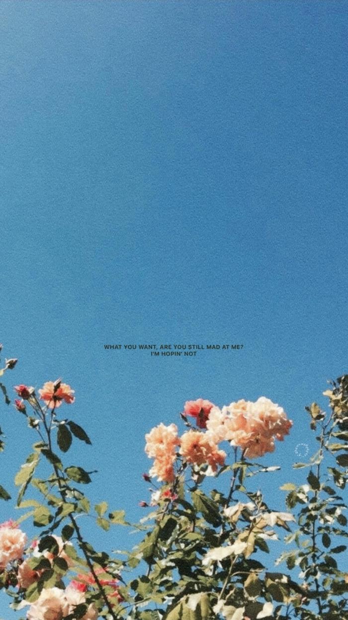 Bild mit vsco Filter von weißen und pinken Rosen mit Spruch, aesthetic backgrounds, Bilder für Handy