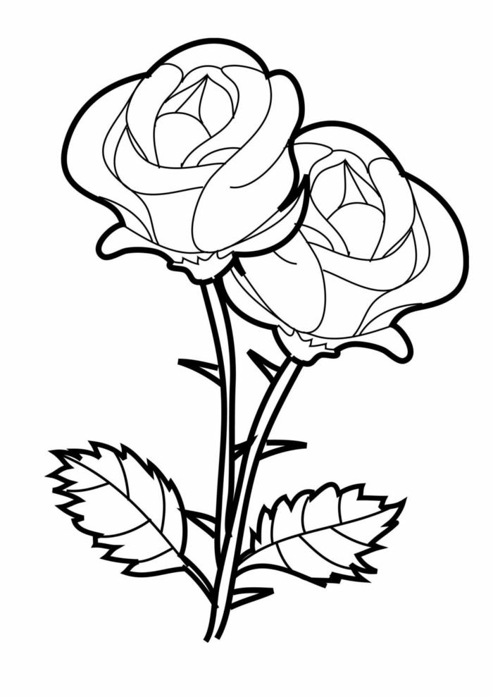 Malvorlage von zwei Rosen mit zwei Blättern, schöne Bilder zum nachmalen und ausmalen
