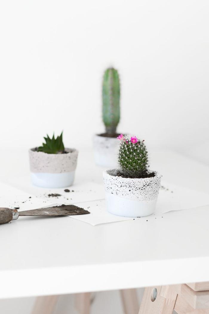 kleiner grüner Kaktus mit rosa Blüten, zwei Kakteen im Hintergrund, Pflanzkübel Beton selber machen