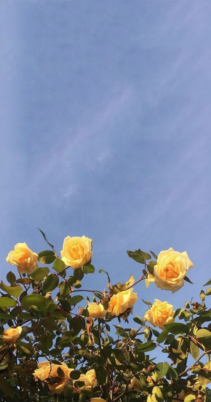 kratives Bild von gelben Rosen am blauen Himmel, tumblr aesthetic backgrounds, ästhetische Tapete