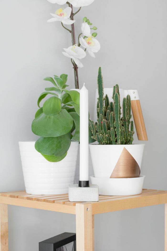 schöne weiße Orchidee und ein Kaktus, Kerzenständer mit einer weißen Kerze, Pflanzkübel aus Beton selber machen