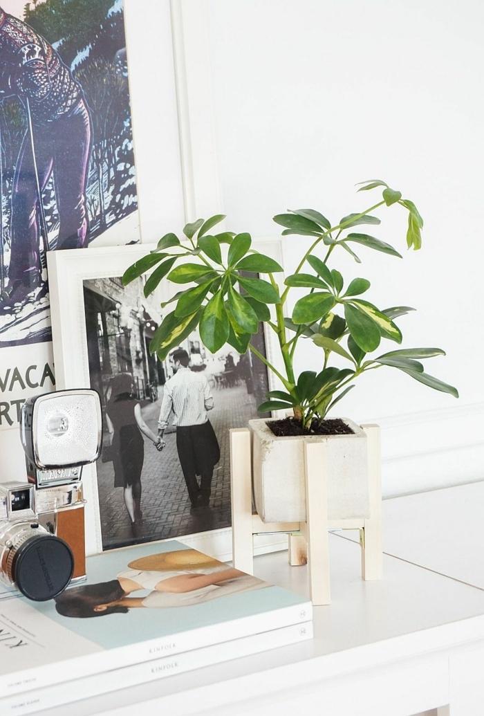 schöne Dekoration für das Wohnzimmer, schwarz weißes Foto, Blumenkübel selber bauen beton