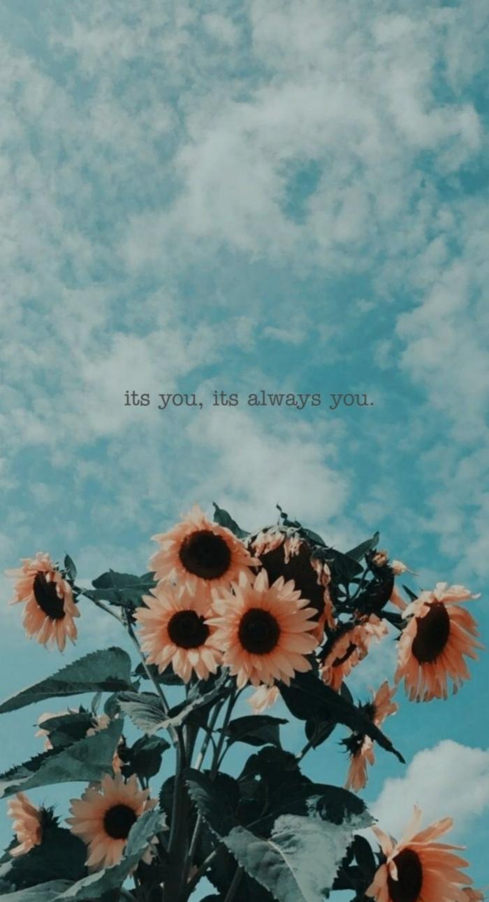 viele schöne Sonnenblumen, blauer Himmel und weiße Wolken, Hintergrundbild mit Spruch, aesthetic Backgrounds Handy