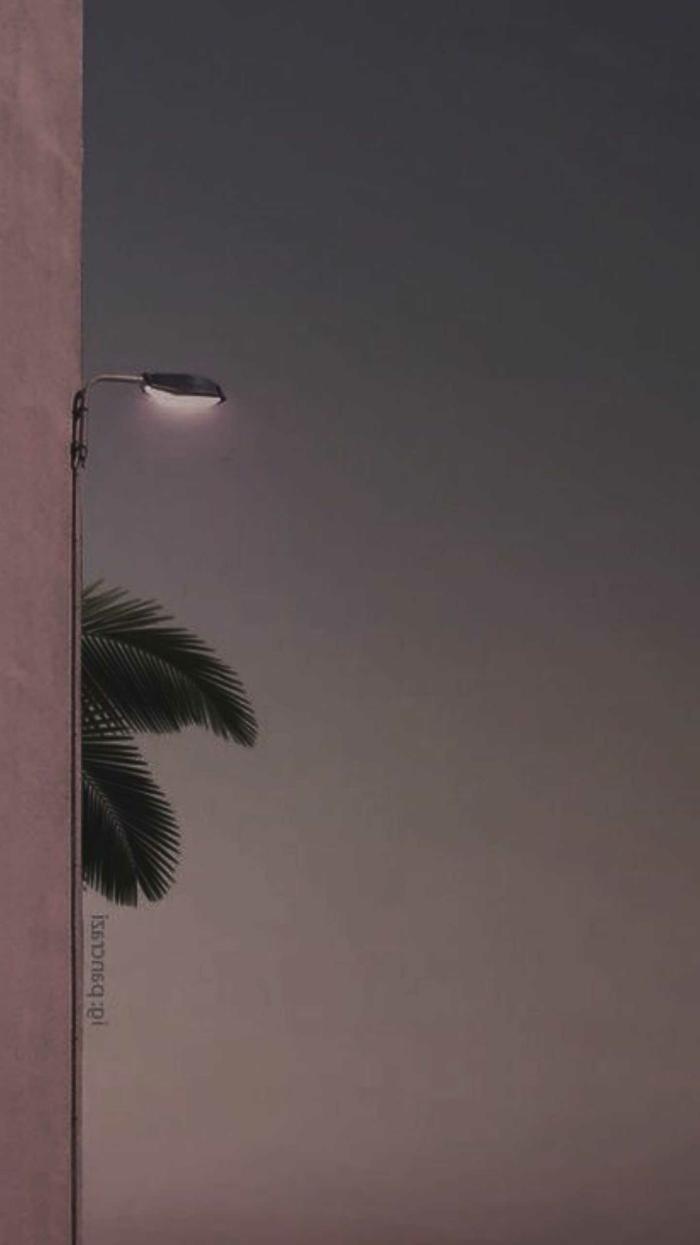 große Blätter von einer Palme und große leuchtende Straßenlampe, aesthetic phone wallpapers