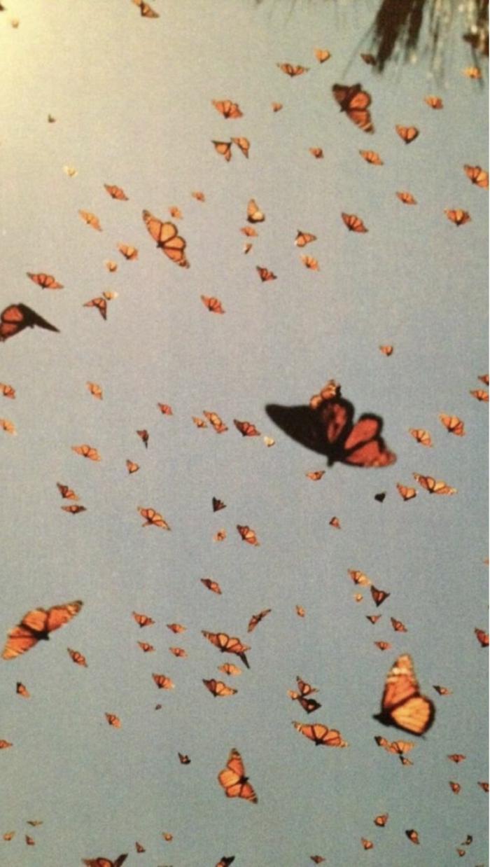 viele fliegende gelbe Schmetterlinge, Foto mit vintage vsco Filter, aesthetic wallpaper Hd, Bilder Handy Hintergrund