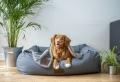 Hilfreiche Tipps für richtige Hundepflege
