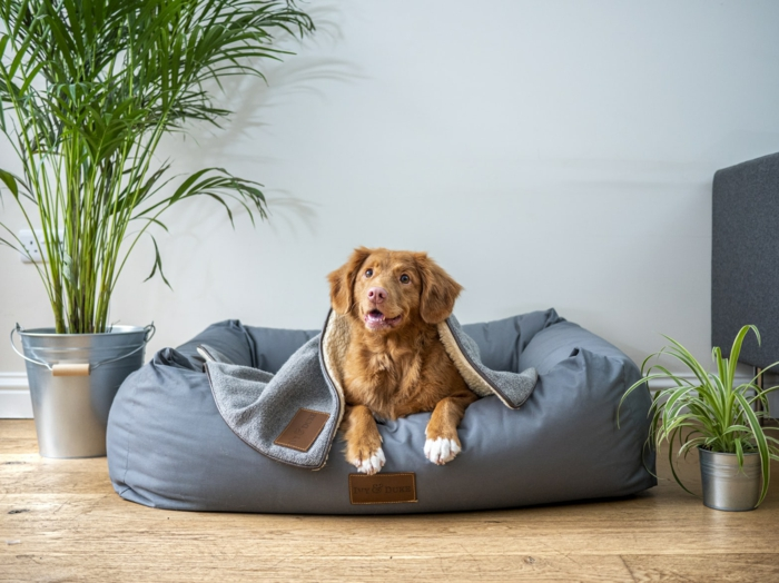 hundepflege , bequemer platz schaffen, großes graues hundebett