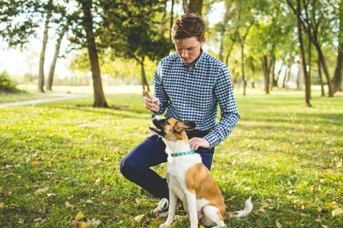 hundepflege tipps und infos, hund training und sozialisierung, übungen für haustiere