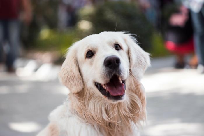 hundepflege tipps und infos, haustier anschaffen, glücklicher hund
