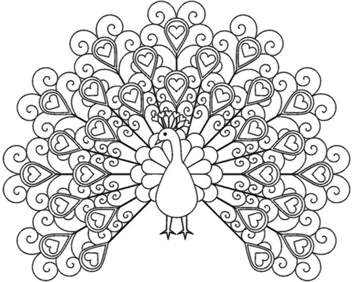 Bild von einer großen Pfau mit abgebildeten Herzen, Bilder zum ausdrucken kostenlos,