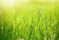 Heute verraten wir Ihnen, wie Sie Ihren Rasen richtig vertikutieren!