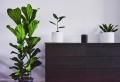 Kommoden – Machen Sie den Wohnraum kommod