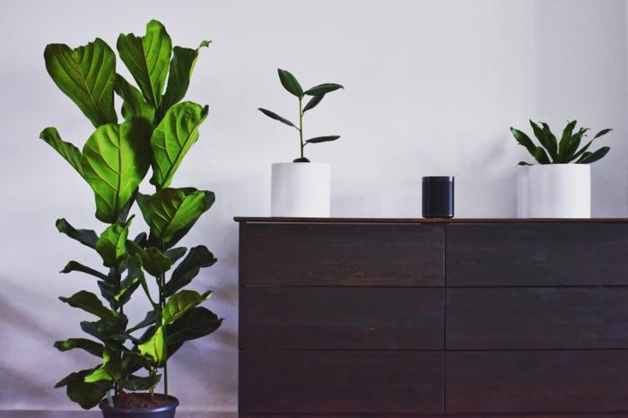 Kommoden selber gestalten mit Tylko, große grüne Pflanze und zwei kleine Pflanzen, dunkler Schrank aus Holz