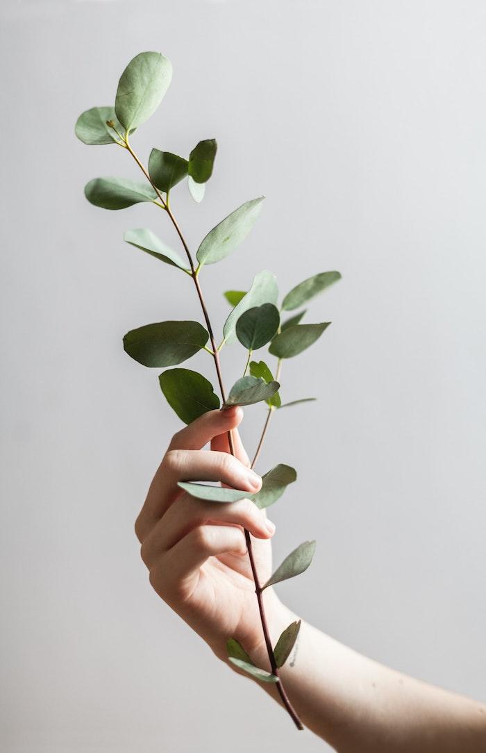 eine hand mit einem ast eucaluyptus wespen vertreiben mit ätherischen öle wie kann man wespen vertreiben mit hausmitteln